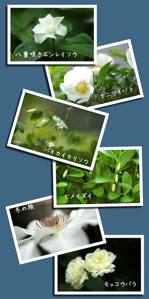 5月1日庭の花2