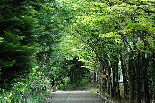 5月4日筑波植物園1