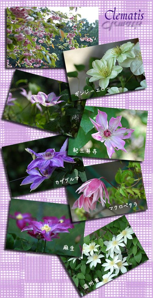 5月4日筑波植物園2