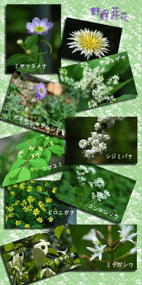 5月4日筑波植物園3