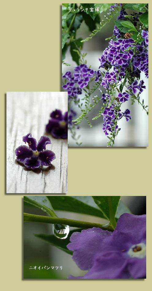 7月23日紫色の花1