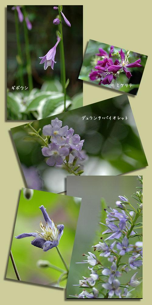 7月23日紫色の花2