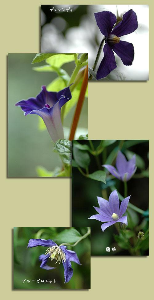 7月23日紫色の花3