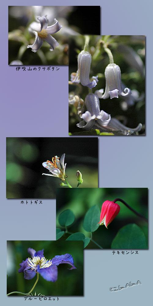 9月21日flower