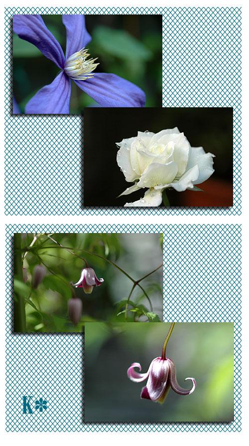 10月9日庭の花