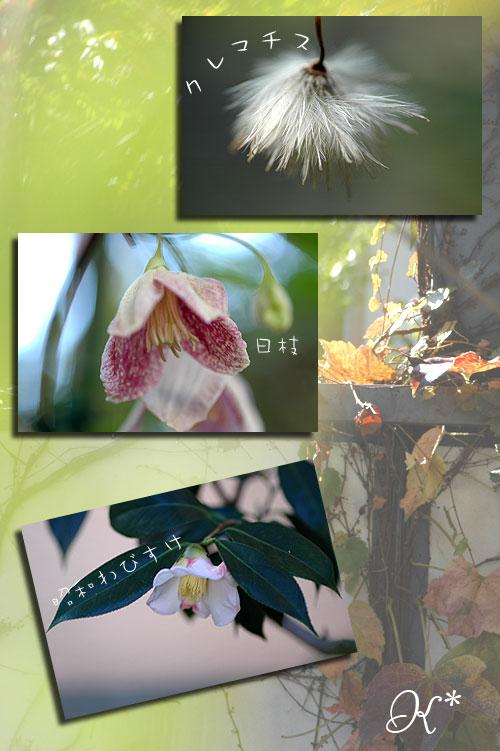 11月14日庭の花1