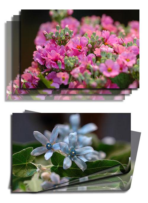 1月13日春の花1