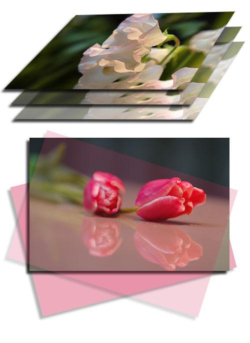 1月13日春の花2