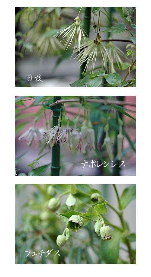 1月19日庭の花1