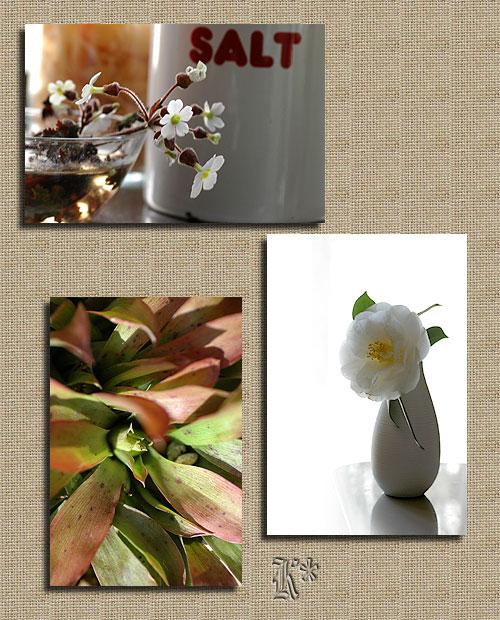 2月6日庭の花