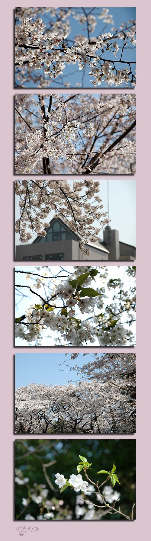 3月31日青山墓地3
