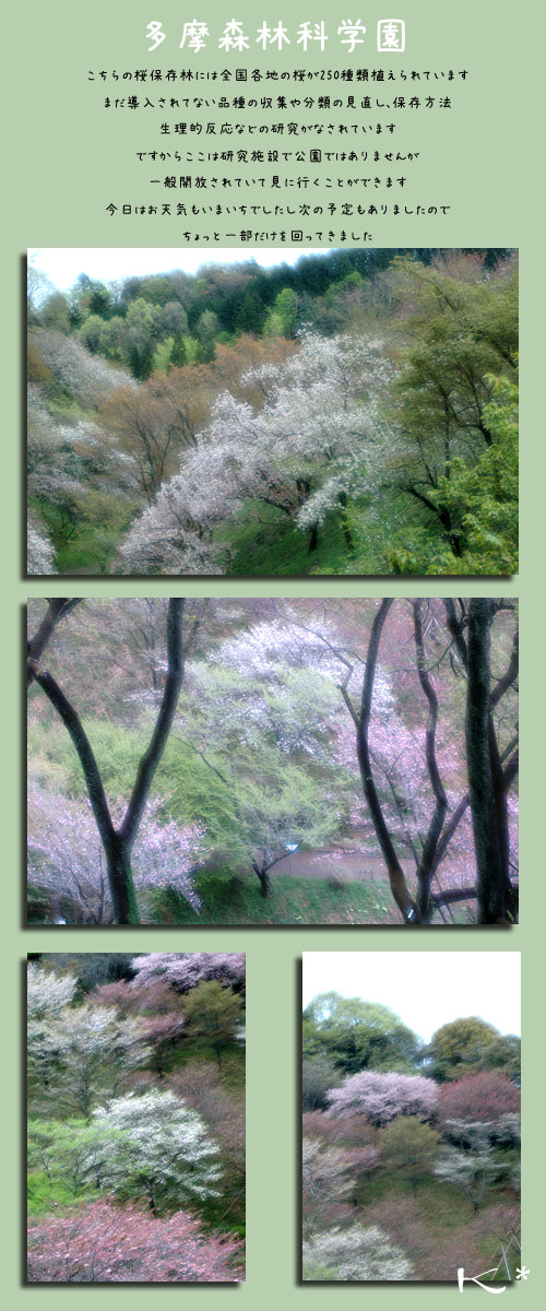 4月17日高尾の桜1