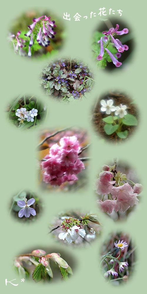 4月17日高尾の桜2