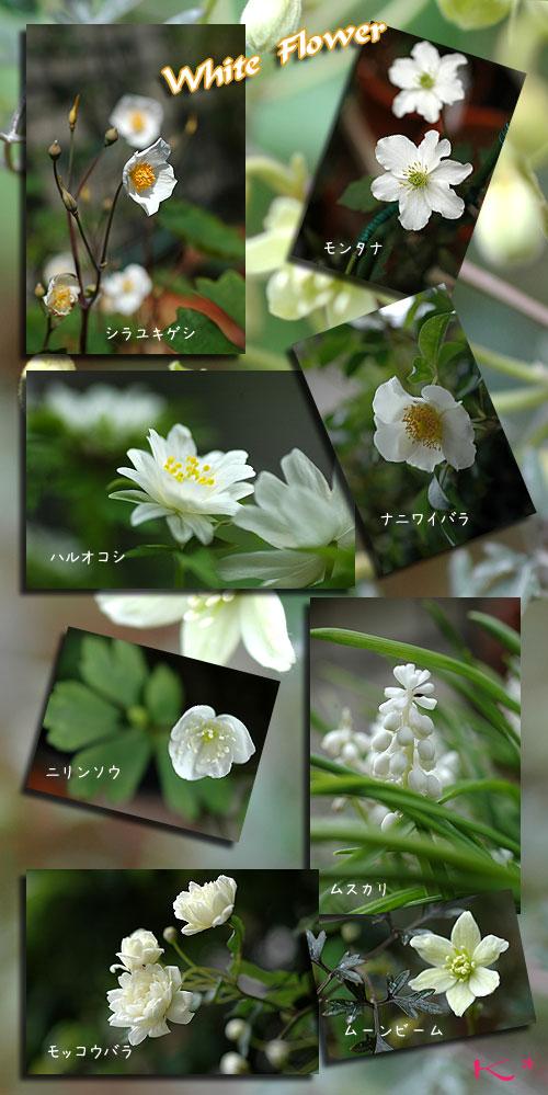 4月18日白い花
