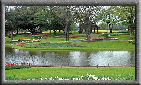 4月23日昭和記念公園2