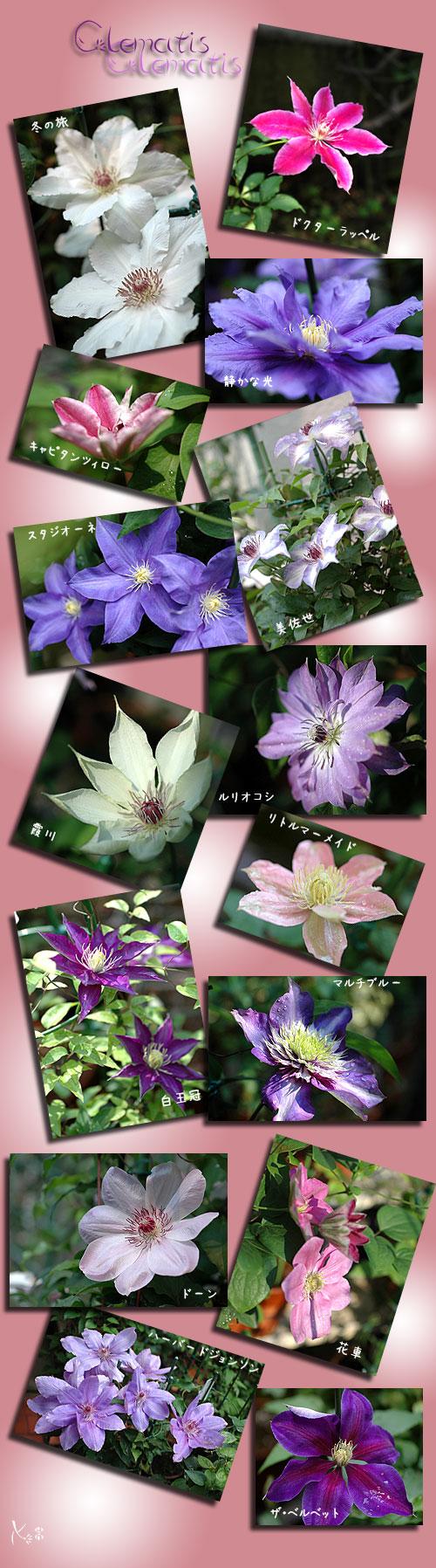5月3日庭の花2