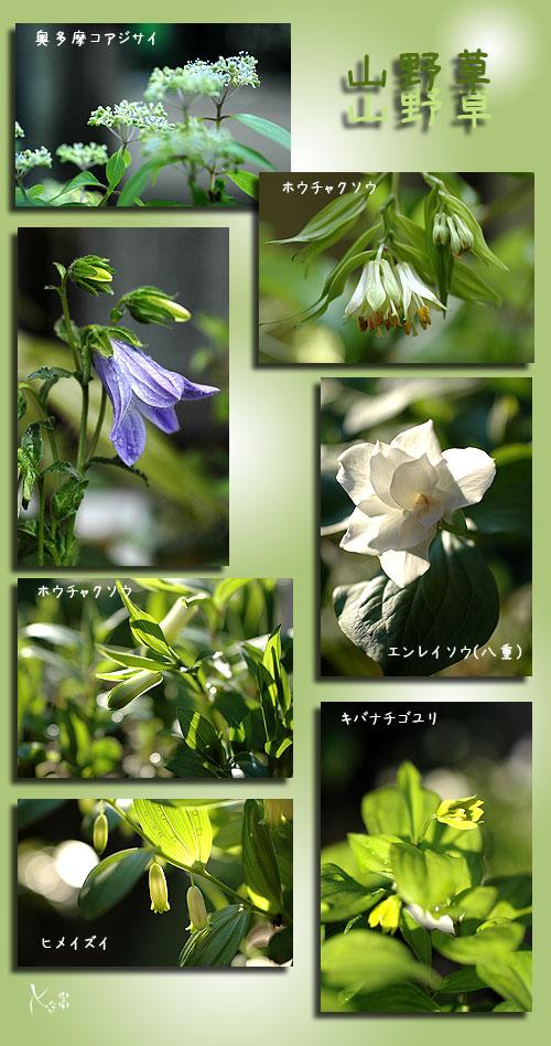 5月3日庭の花3