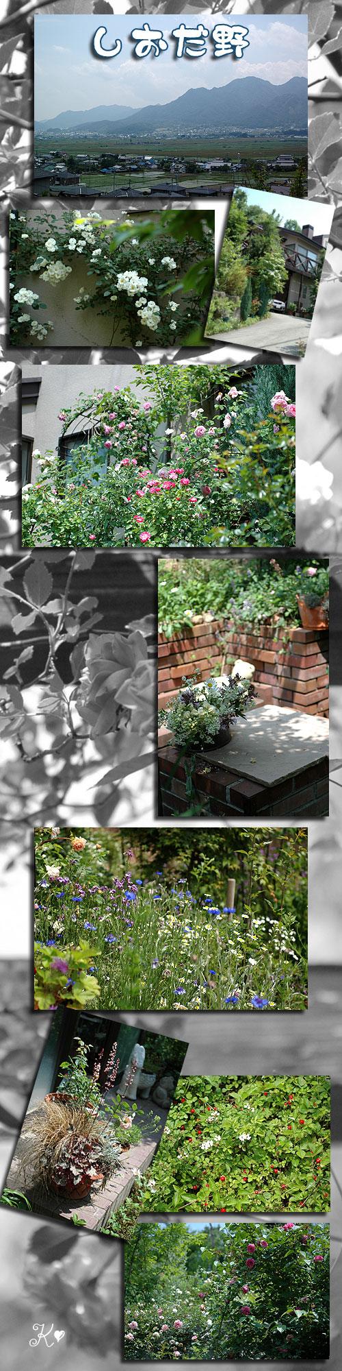 6月10日kei's garden1