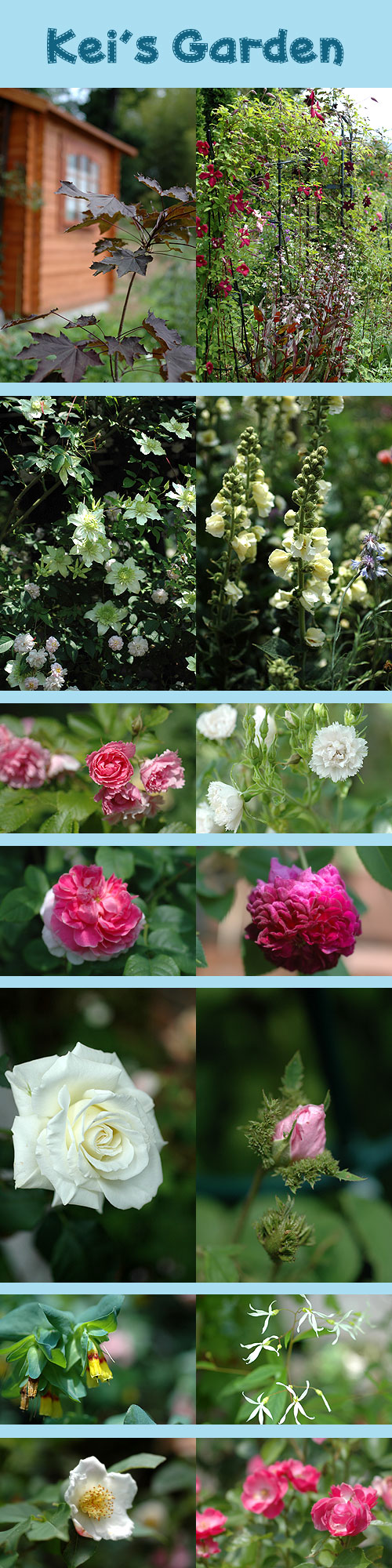 6月10日kei's garden2