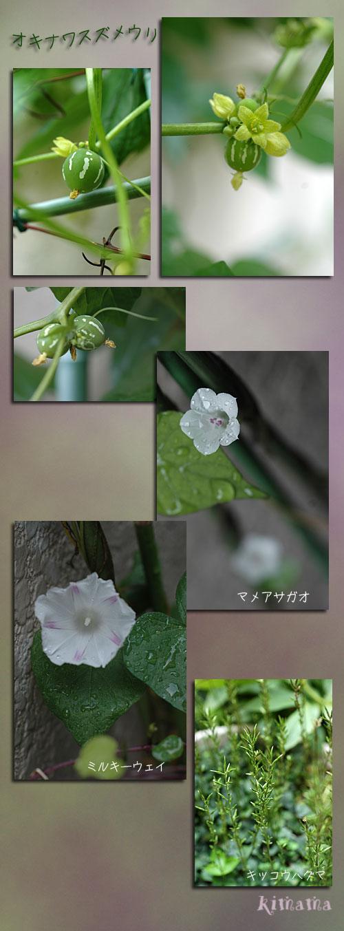9月28日庭の花1