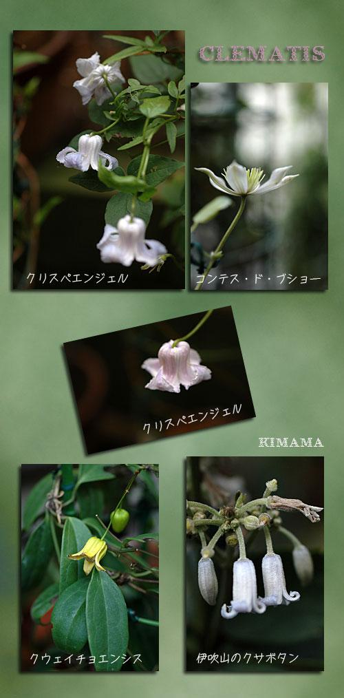 9月28日庭の花2