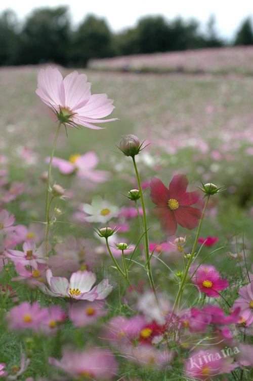 10月14日国営昭和記念公園