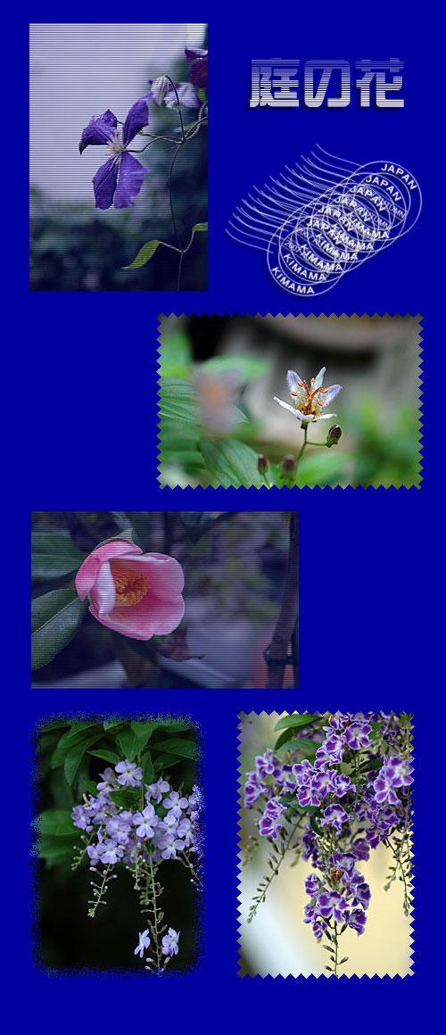11月5日庭の花