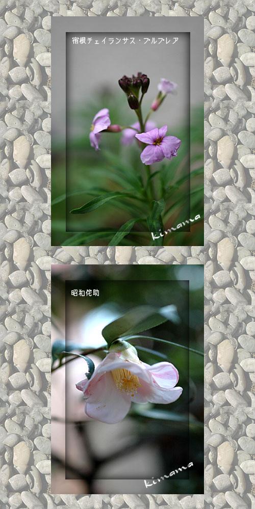 12月15日庭の花