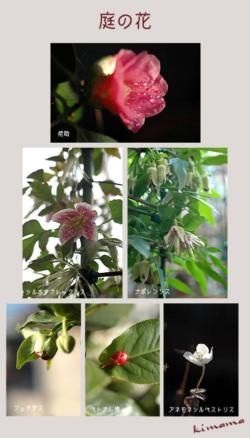 12月28日庭の花