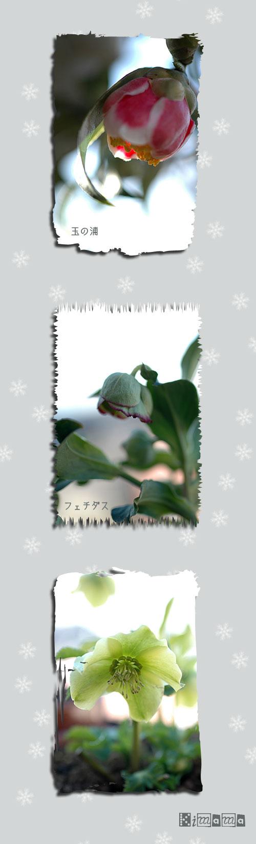 1月31日庭の花