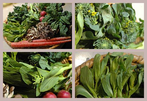 3月14日野菜