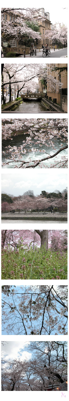 2007京都さくら