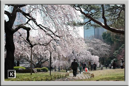 3月28日小石川後楽園1