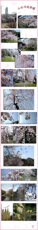 3月28日小石川後楽園2