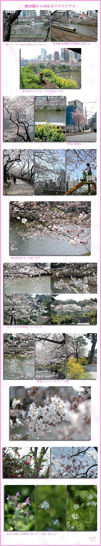 3月29日小石川後楽園3