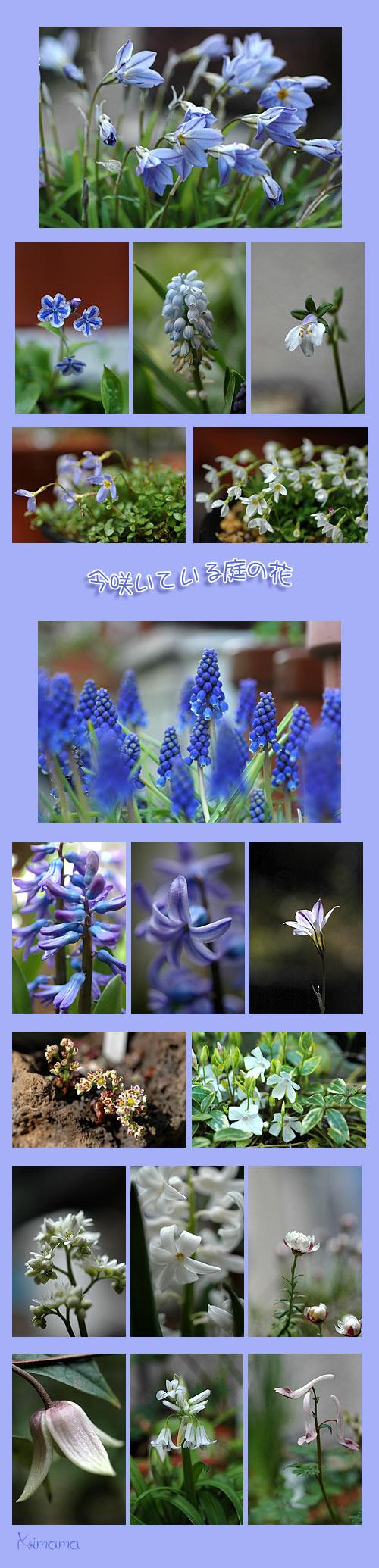 4月1日庭の花