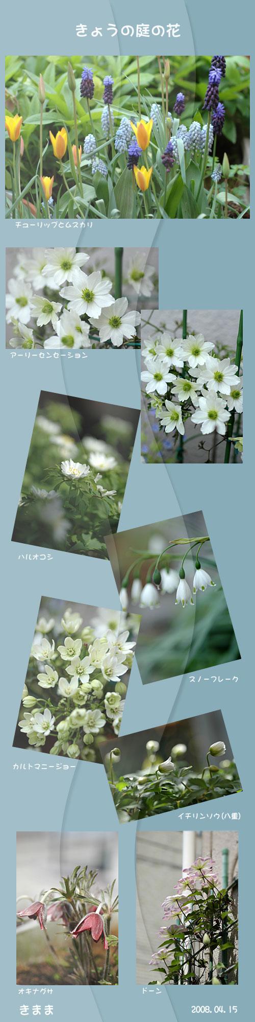 4月15日庭の花