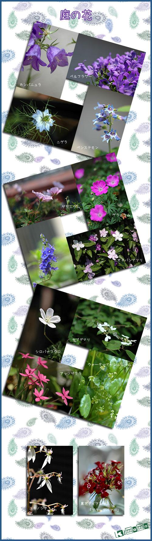 5月23日庭の花