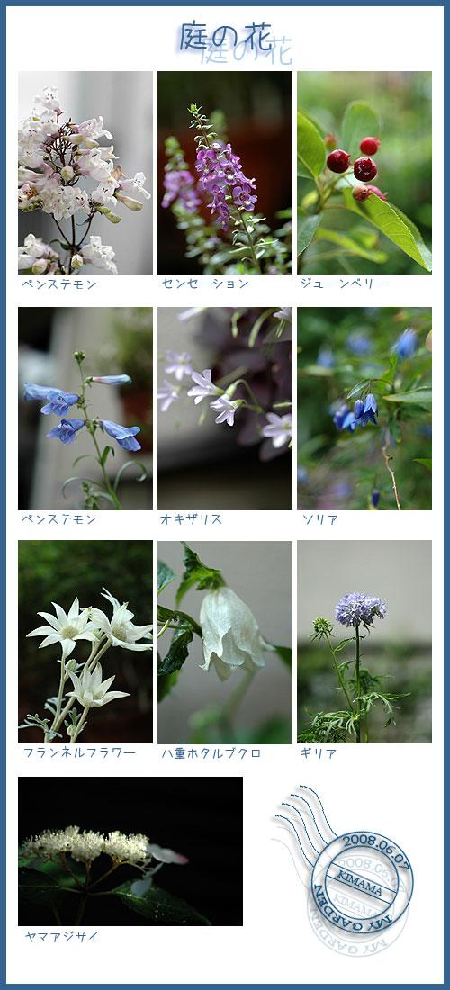 6月7日庭の花
