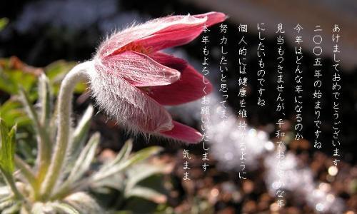 20050102214615s.jpg