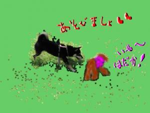 snap_kinakobiyori_2008105113916_convert_20081017124626.jpg
