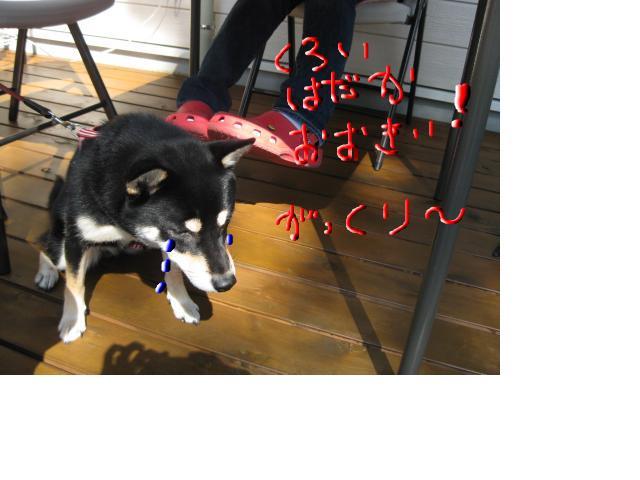 snap_kinakobiyori_2008105114245.jpg