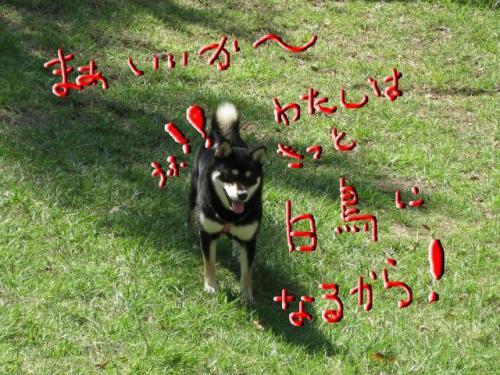 snap_kinakobiyori_2008105114924_convert_20081017125939.jpg