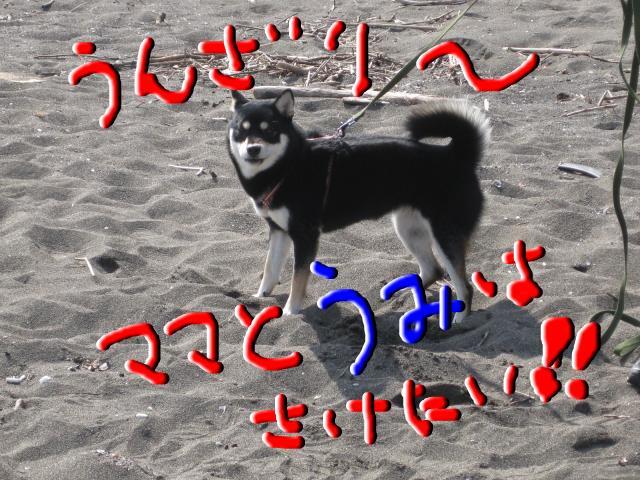 snap_kinakobiyori_200810511638.jpg