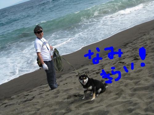 snap_kinakobiyori_2008105134038.jpg