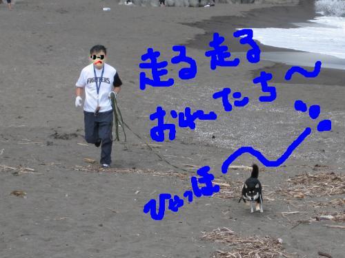 snap_kinakobiyori_2008105134839.jpg