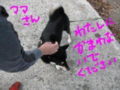 snap_kinakobiyori_2008105135320.jpg