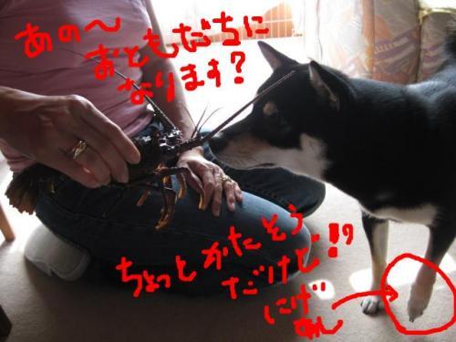 snap_kinakobiyori_20081051593_convert_20081017151640.jpg