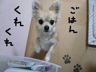 P1000559-deji.jpg