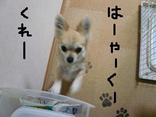 P1000561-deji.jpg